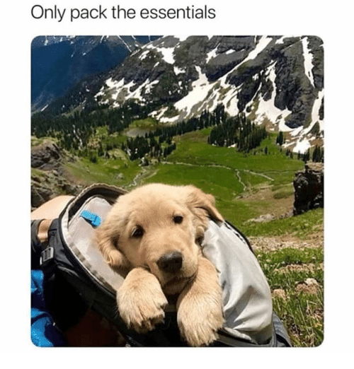 Memes, 🤖, and Essentials: Only pack the essentials