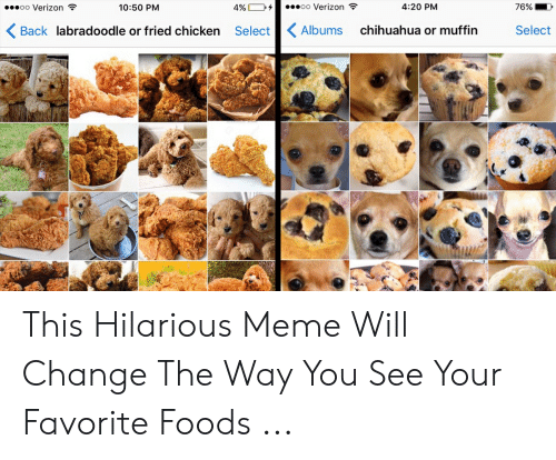 25 Best Memes About Labradoodle Or Fried Chicken