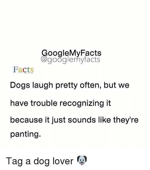 Dog Laughing: oogleMy Facts  google my facts  Facts  Dogs laugh pretty often, but we  have trouble recognizing it  because it just sounds like they're  panting. Tag a dog lover 🐶