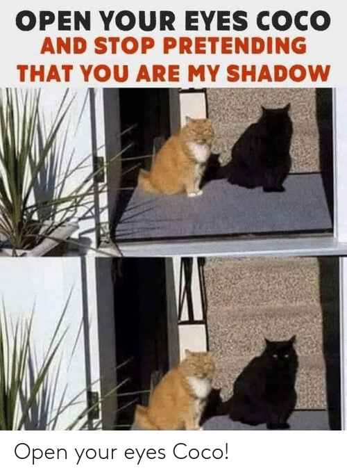 CoCo, Shadow, and Open: OPEN YOUR EYES COCO  AND STOP PRETENDING  THAT YOU ARE MY SHADOW Open your eyes Coco!