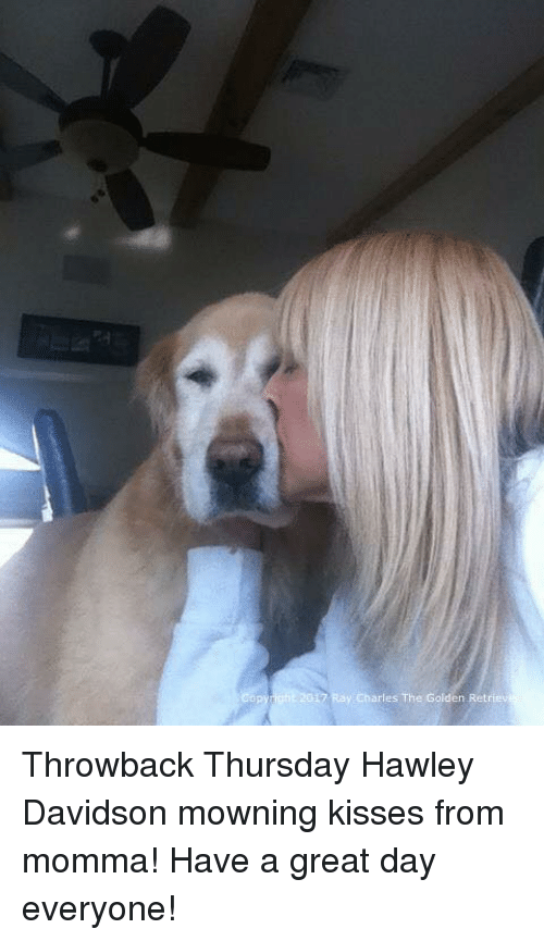 opi: opy)에이·2017 Ray:Charles The Golden Retriev Throwback Thursday Hawley Davidson mowning kisses from momma! Have a great day everyone!
