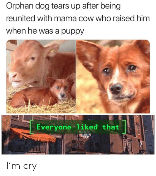orphan: Orphan dog tears up after being  reunited with mama cow who raised him  when he was a puppy  Everyone 1iked that I'm cry