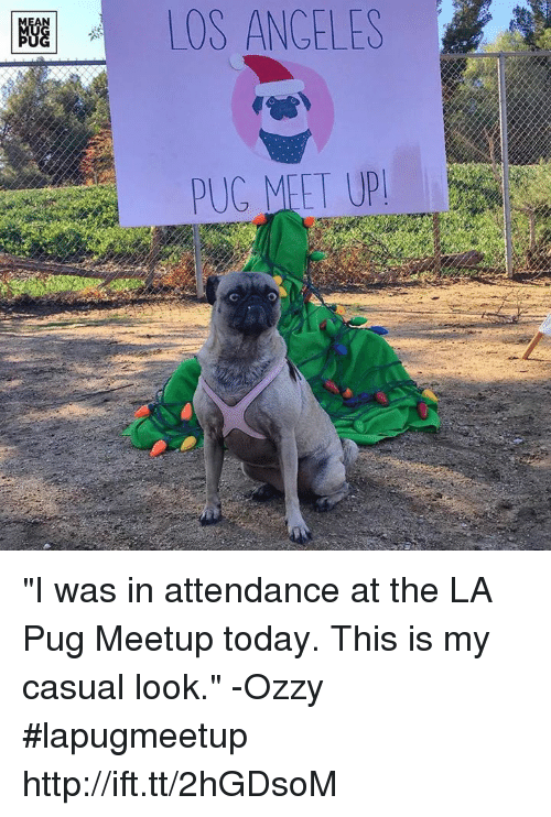 "Ozzies: OS ANGELES ""I was in attendance at the LA Pug Meetup today. This is my casual look."" -Ozzy #lapugmeetup http://ift.tt/2hGDsoM"