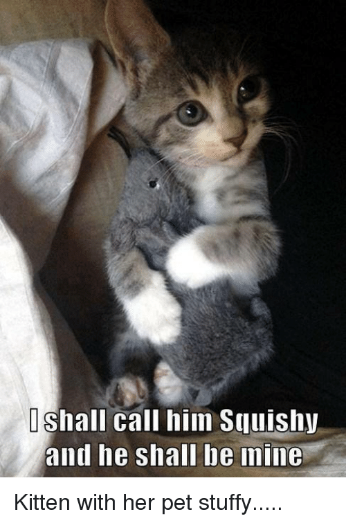 Stuffie: OShall call him Sullishy  and he shall be mine Kitten with her pet stuffy.....
