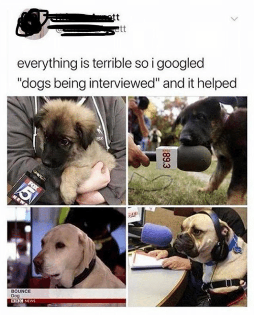 "Dogs, News, and Dog: ott  everything is terrible so i googled  ""dogs being interviewed"" and it helped  BOUNCE  Dog  DOG NEWS  89.3"