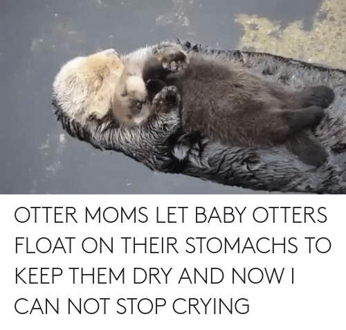 Keep: OTTER MOMS LET BABY OTTERS FLOAT ON THEIR STOMACHS TO KEEP THEM DRY AND NOW I CAN NOT STOP CRYING