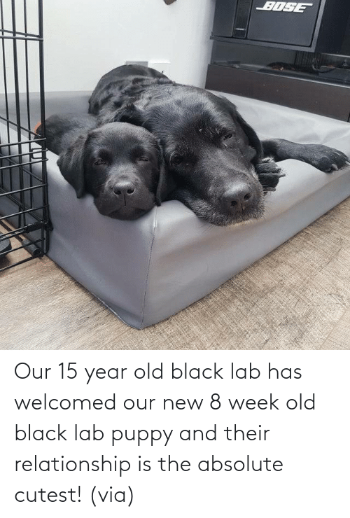Absolute: Our 15 year old black lab has welcomed our new 8 week old black lab puppy and their relationship is the absolute cutest! (via)