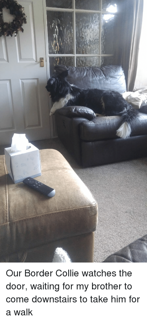 Border Collie, Watches, and Waiting...