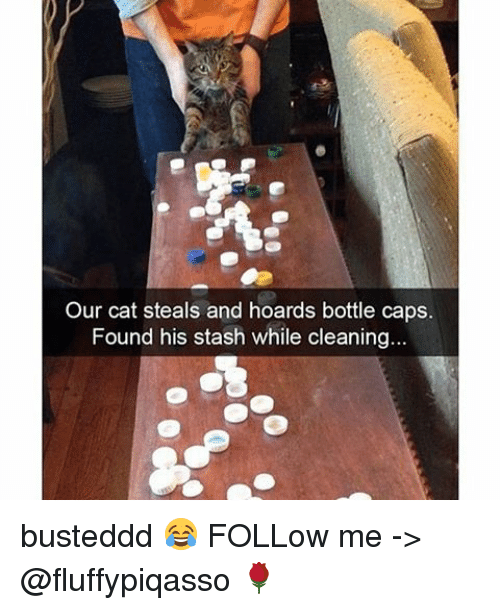 Stashe: Our cat steals and hoards bottle caps.  Found his stash while cleaning busteddd 😂 FOLLow me -> @fluffypiqasso 🌹