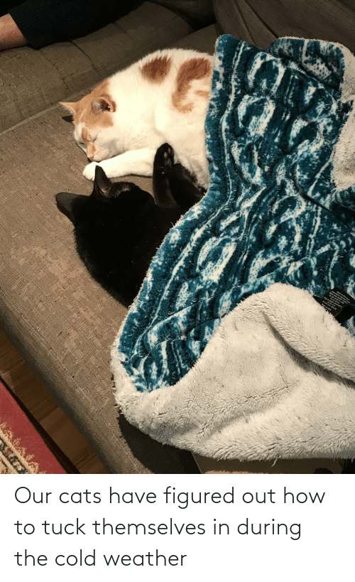 Cold: Our cats have figured out how to tuck themselves in during the cold weather