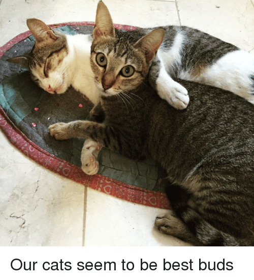 Cats, Best, and Buds