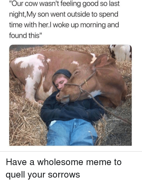 "quell: Our cow wasn't feeling good so last  night,My son went outside to spend  time with her.l woke up morning and  found this"" <p>Have a wholesome meme to quell your sorrows</p>"