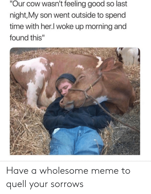 "quell: Our cow wasn't feeling good so last  night,My son went outside to spend  time with her.l woke up morning and  found this"" Have a wholesome meme to quell your sorrows"