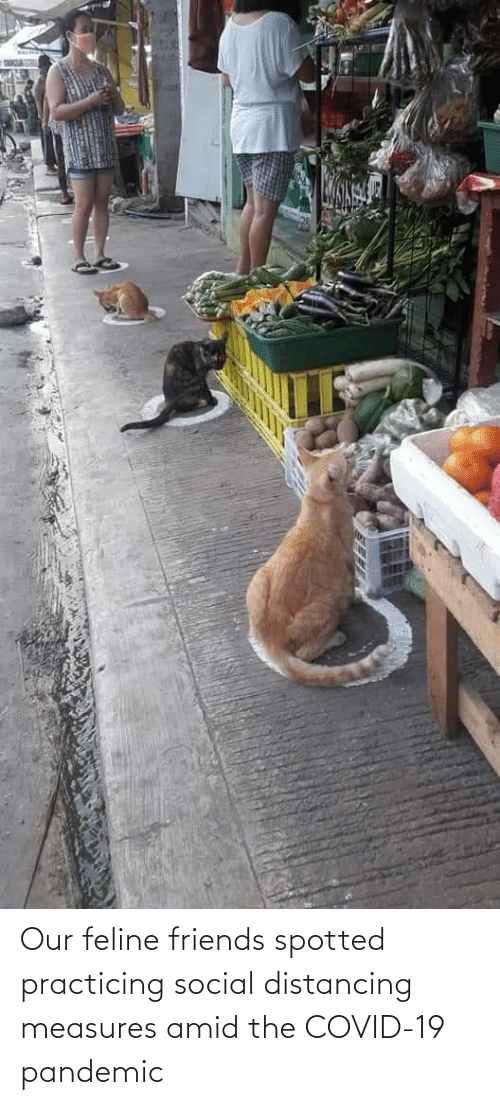 social: Our feline friends spotted practicing social distancing measures amid the COVID-19 pandemic