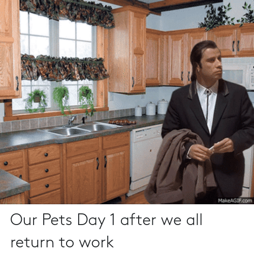 Pets: Our Pets Day 1 after we all return to work