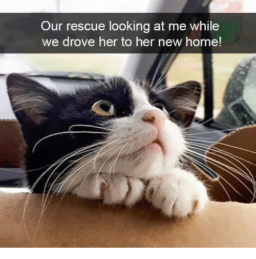 Memes, Home, and 🤖: Our rescue looking at me while  we drove her to her new home!