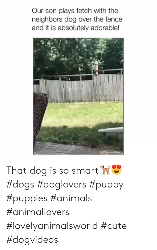 So Smart: Our son plays fetch with the  neighbors dog over the fence  and it is absolutely adorable!  NgthumanBcings That dog is so smart🐕😍 #dogs #doglovers #puppy #puppies #animals #animallovers #lovelyanimalsworld #cute #dogvideos
