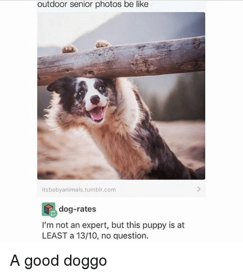seniority: outdoor senior photos be like  itsbabyanimals.tumblr.com  d-rates  dog-rate:s  I'm not an expert, but this puppy is at  LEAST a 13/10, no question. A good doggo