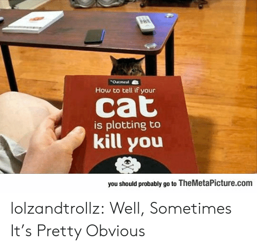 Plotting: Outmeal  How to tell if your  cat  is plotting to  kill you  you should probably go to TheMetaPicture.com lolzandtrollz:  Well, Sometimes It's Pretty Obvious