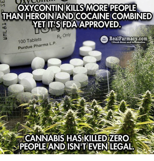 purdue: OXY CONTIN KILLS MORE PEOPLE  THAN HEROINLANDCOCAINE COMBINED  FDA  YET ITIS Rx Only  e Real Farmacy.com  100 Tablets  L. Purdue Pharma P  Fresh News and Information  CANNABIS HAS KILLEDZERO  PEOPLEAND ISN'T EVEN LEGAL