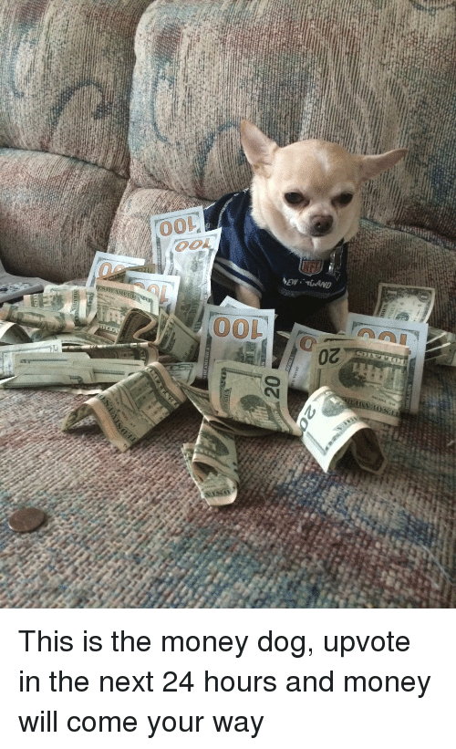 Money Dog: oz  20  anrp.. M74  00  oo  00 This is the money dog, upvote in the next 24 hours and money will come your way