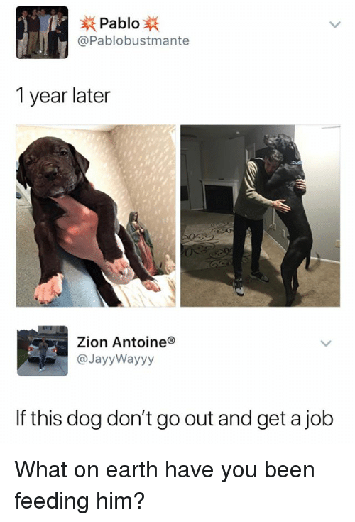 Earth, Dank Memes, and Been: Pablo  @Pablobustmante  1 year later  Zion Antoineo  @JayyWayyy  If this dog don't go out and get a job What on earth have you been feeding him?