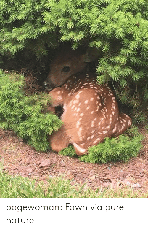 Tumblr, Blog, and Http: pagewoman: Fawn via pure nature