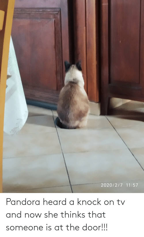 The Door: Pandora heard a knock on tv and now she thinks that someone is at the door!!!