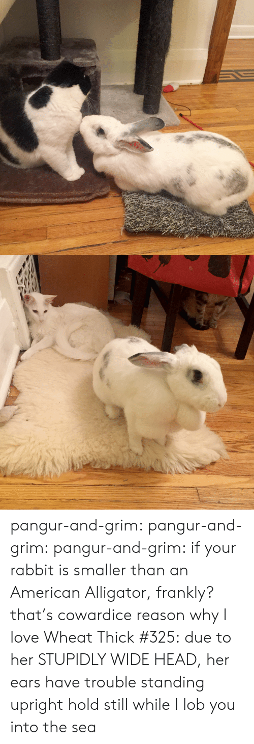 into-the-sea: pangur-and-grim: pangur-and-grim:  pangur-and-grim: if your rabbit is smaller than an American Alligator, frankly? that's cowardice reason why I love Wheat Thick #325:due to her STUPIDLY WIDE HEAD, her ears have trouble standing upright  hold still while I lob you into the sea