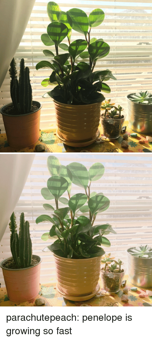 Tumblr, Blog, and Http: parachutepeach: penelope is growing so fast