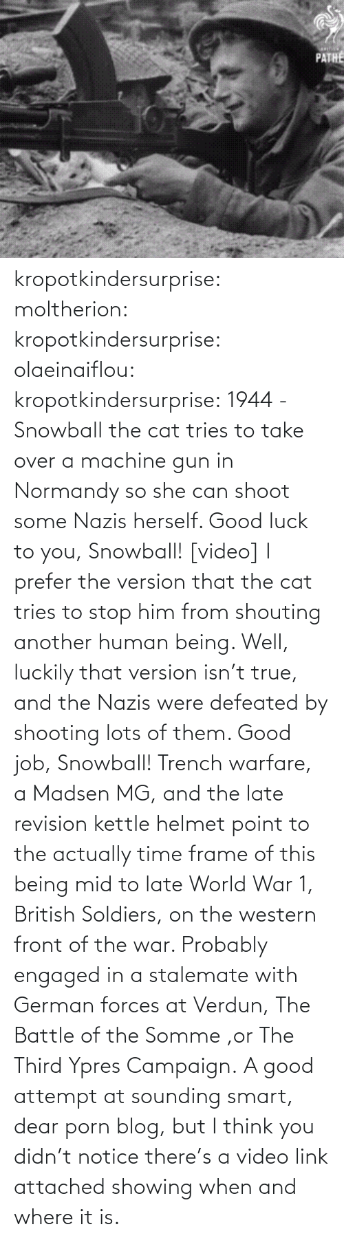 Think You: PATHE kropotkindersurprise: moltherion:  kropotkindersurprise:  olaeinaiflou:  kropotkindersurprise: 1944 - Snowball the cat tries to take over a machine gun in Normandy so she can shoot some Nazis herself. Good luck to you, Snowball! [video]  I prefer the version that the cat tries to stop him from shouting another human being.   Well, luckily that version isn't true, and the Nazis were defeated by shooting lots of them. Good job, Snowball!   Trench warfare, a Madsen MG, and the late revision kettle helmet point to the actually time frame of this being mid to late World War 1, British Soldiers, on the western front of the war. Probably engaged in a stalemate with German forces at Verdun, The Battle of the Somme ,or The Third Ypres Campaign.  A good attempt at sounding smart, dear porn blog, but I think you didn't notice there's a video link attached showing when and where it is.