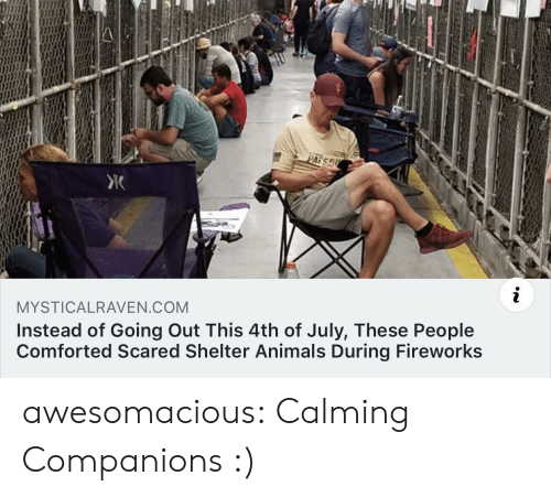 Animals, Tumblr, and 4th of July: PATS  i  MYSTICALRAVEN.COM  Instead of Going Out This 4th of July, These People  Comforted Scared Shelter Animals During Fireworks awesomacious:  Calming Companions :)