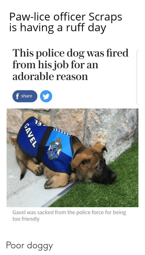 Lice: Paw-lice officer Scraps  is having a ruff day  This police dog was fired  from his job for an  adorable reason  share  Gavel was sacked from the police force for being  too friendly Poor doggy