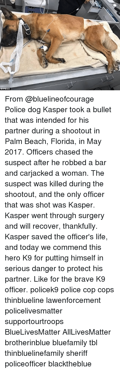 Bulletted: PBSO From @bluelineofcourage Police dog Kasper took a bullet that was intended for his partner during a shootout in Palm Beach, Florida, in May 2017. Officers chased the suspect after he robbed a bar and carjacked a woman. The suspect was killed during the shootout, and the only officer that was shot was Kasper. Kasper went through surgery and will recover, thankfully. Kasper saved the officer's life, and today we commend this hero K9 for putting himself in serious danger to protect his partner. Like for the brave K9 officer. policek9 police cop cops thinblueline lawenforcement policelivesmatter supportourtroops BlueLivesMatter AllLivesMatter brotherinblue bluefamily tbl thinbluelinefamily sheriff policeofficer blacktheblue