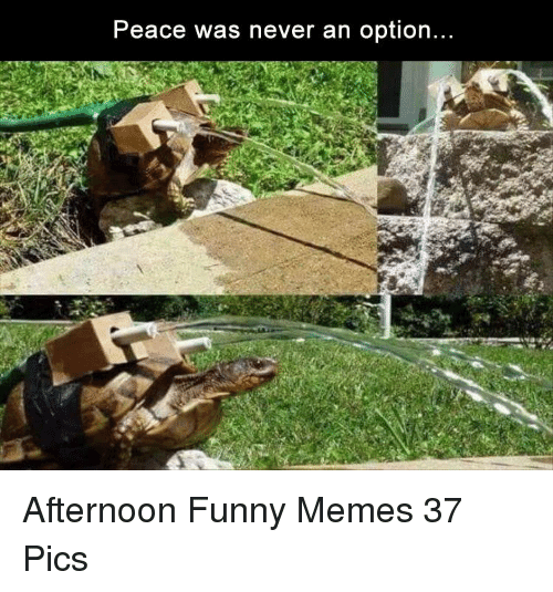 Peace Was Never An Option: Peace was never an option Afternoon Funny Memes 37 Pics