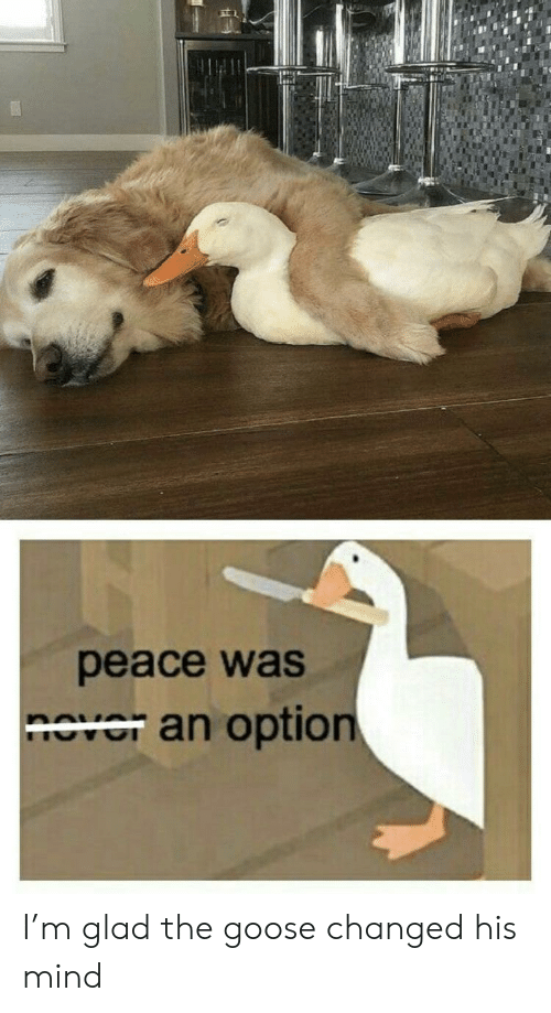 Mind, Peace, and Goose: peace was  nover an option I'm glad the goose changed his mind