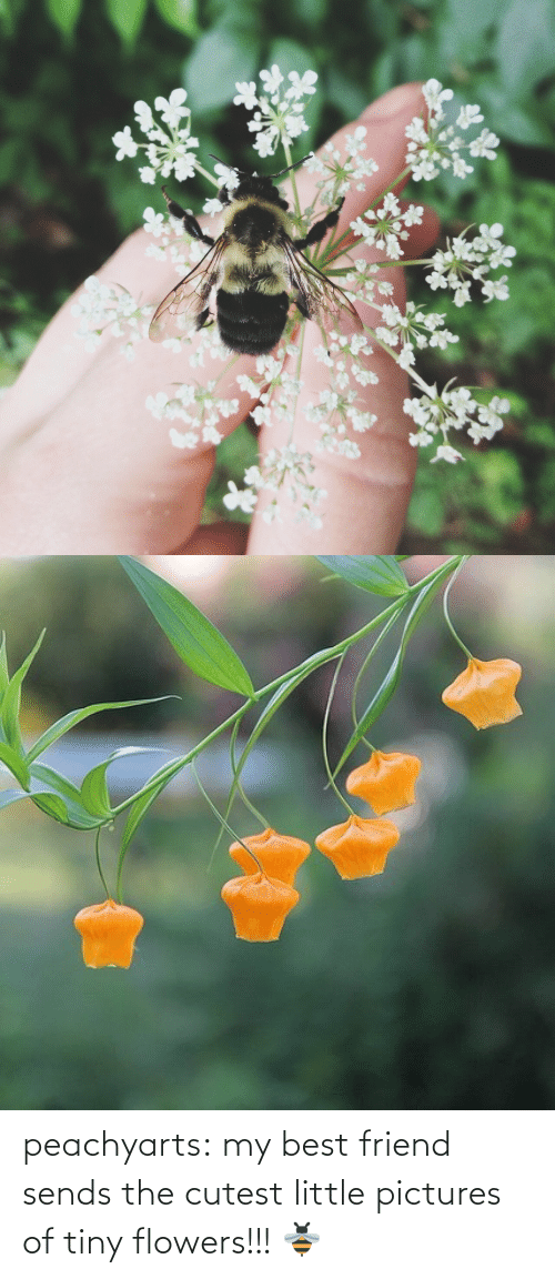 Pictures: peachyarts:  my best friend sends the cutest little pictures of tiny flowers!!! 🐝