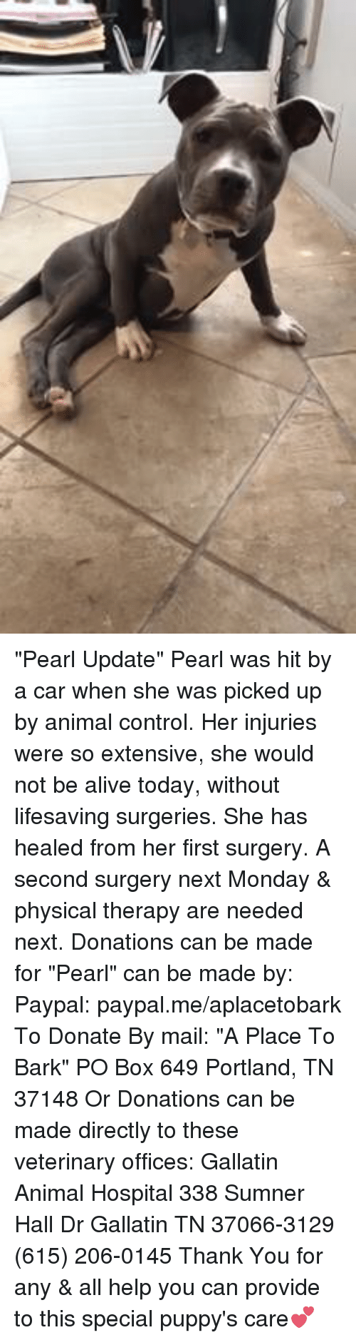 "physic: ""Pearl Update"" Pearl was hit by a car when she was picked up by animal control.  Her injuries were so extensive, she would not be alive today, without lifesaving surgeries. She has healed from her first surgery.   A second surgery next Monday & physical therapy are needed next. Donations can be made for ""Pearl"" can be made by: Paypal: paypal.me/aplacetobark To Donate By mail:  ""A Place To Bark"" PO Box 649 Portland, TN 37148 Or Donations can be made directly to these veterinary offices: Gallatin Animal Hospital 338 Sumner Hall Dr Gallatin TN 37066-3129 (615) 206-0145  Thank You for any & all help you can provide to this special puppy's care💕"