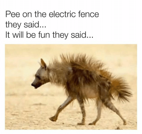 Dank, 🤖, and Fun: Pee on the electric fence  they said...  It will be fun they said