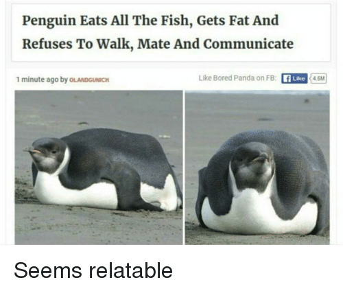 Bored Panda: Penguin Eats All The Fish, Gets Fat And  Refuses To Walk, Mate And Communicate  1 minute ago by OLANDGUNICH  Like Bored Panda on FB: fLike 4.6M Seems relatable