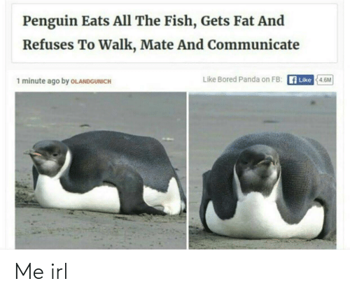 Bored Panda: Penguin Eats All The Fish, Gets Fat And  Refuses To Walk, Mate And Communicate  Like Bored Panda on FB: A Like  1 minute ago by OLANDGUNICH  4.6M Me irl