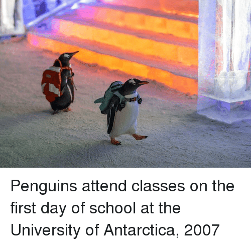 Antarctica: Penguins attend classes on the first day of school at the University of Antarctica, 2007