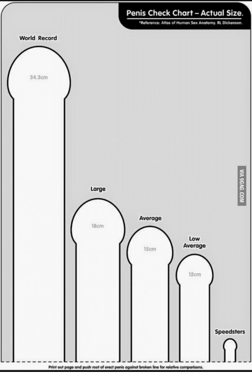 What is the average length for a penis