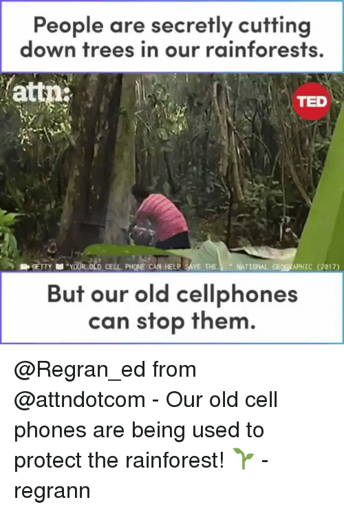 """Memes, Phone, and Ted: People are secretly cutting  down trees in our rainforests,  attn  TED  YOUR OLD CELL PHONE CAN HELP SAVE THE""""NATIONAL GEOGRAPHIC (2017)  But our old cellphones  can stop them @Regran_ed from @attndotcom - Our old cell phones are being used to protect the rainforest! 🌱 - regrann"""
