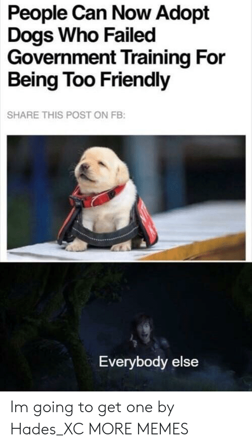 Dank, Dogs, and Memes: People Can Now Adopt  Dogs Who Failed  Government Training For  Being Too Friendly  SHARE THIS POST ON FB:  Everybody else Im going to get one by Hades_XC MORE MEMES