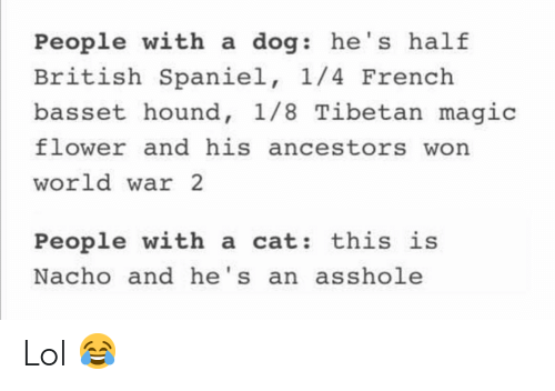 Funny, Lol, and Flower: People with a dog: he's half  British Spaniel, 1/4 French  basset hound, 1/8 Tibetan magic  flower and his ancestors won  world war 2  People with a cat: this is  Nacho and he's an asshole Lol 😂