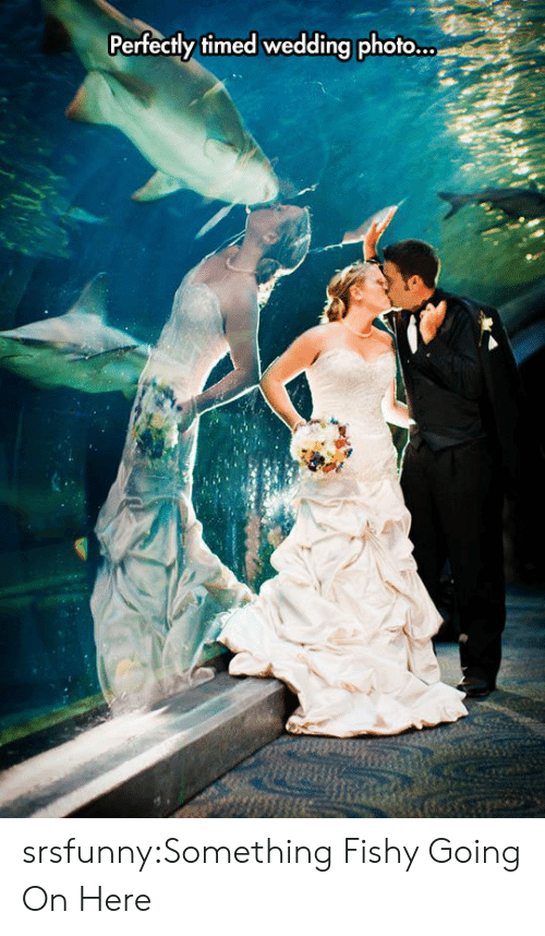 Something Fishy: Perfectly timed wedding photo... srsfunny:Something Fishy Going On Here