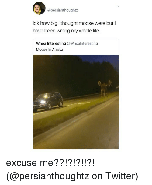 Life, Memes, and Twitter: @persianthoughtz  ldk how big I thought moose were but I  have been wrong my whole life.  Whoa Interesting @Whoalnteresting  Moose in Alaska excuse me??!?!?!!?! (@persianthoughtz on Twitter)