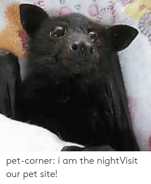 I Am The Night: pet-corner:  i am the nightVisit our pet site!