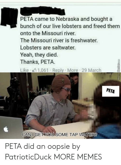 Dank, Memes, and Target: PETA came to Nebraska and bought a  bunch of our live lobsters and freed them  onto the Missouri river.  The Missouri river is freshwater.  Lobsters are saltwater.  Yeah, they died.  Thanks, PETA.  PETA  CAN I GET YOU SOME TAP WATER PETA did an oopsie by PatrioticDuck MORE MEMES